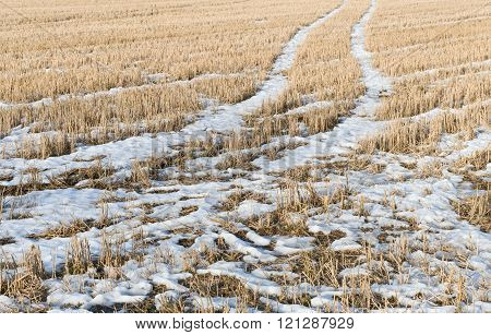 Early Spring In Stubble Field