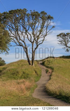 The Beautiful Scene Of Walking Track Beside The Big Tree On Auckland's Mount Eden.