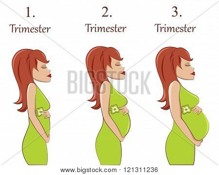Vector illustration Pregnant woman-first,second and third trimester