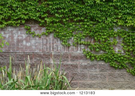 Background Brick Wall With Ivy