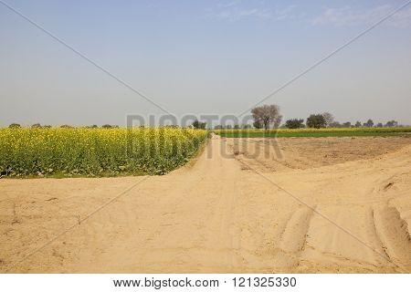 Agricultural Landscape Of Rajasthan