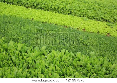 variety vegetable plants in growth at vegetable garden