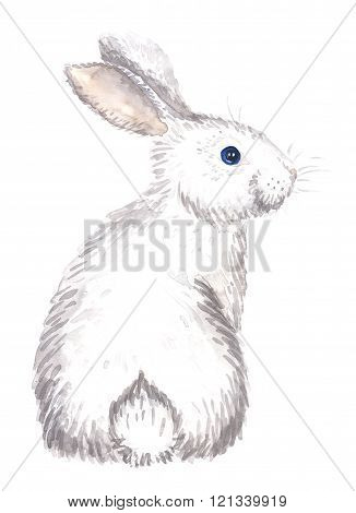 white rabbit isolated