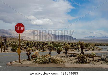 Stop Sign In Cholla Garden Desert
