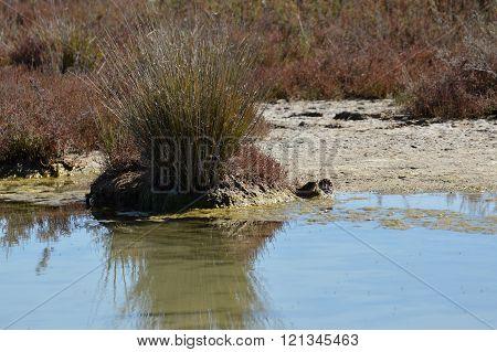 marsh vegetation