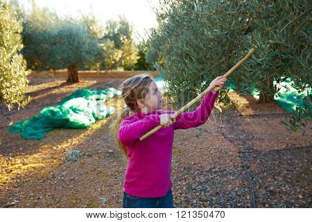 Olives harvest farmer kid girl picking in Mediterranean