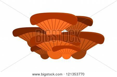 Mushrooms Illustration on white background