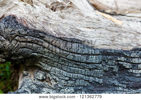 Photo of a Dry wooden with char