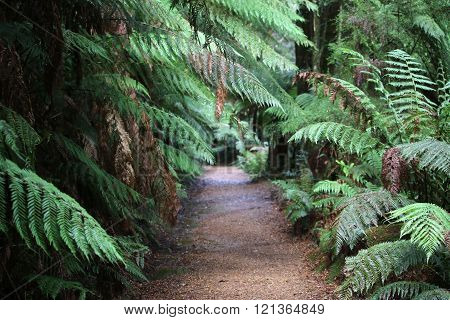 The Tarkine rainforest in Tasmania