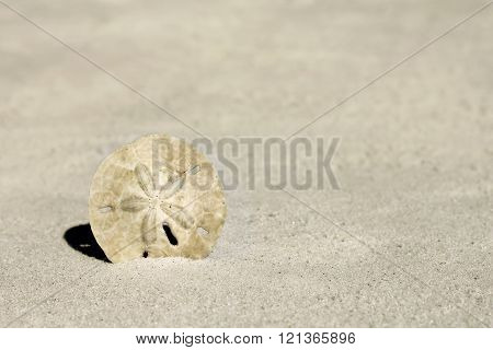 Sand Dollar At Beach Background