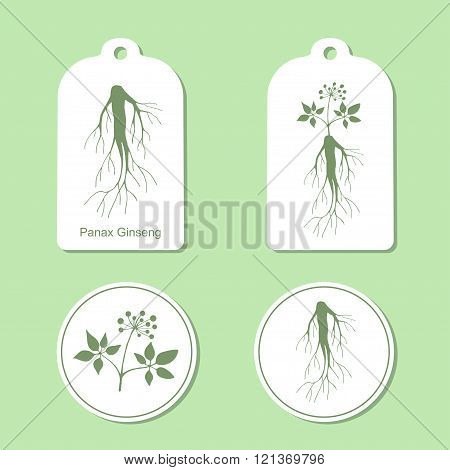 Silhouette of panax ginseng with leaves and root.  Medicinal plant. Healthy lifestyle. Vector  Illus