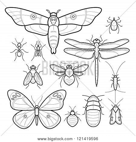 Insects butterfly moth dragonfly bee fly moths cockroaches bedbugs mites ants mosquitoes silverfish. Set of vector insects. Collection of insects in modern style mono line. Black and white.