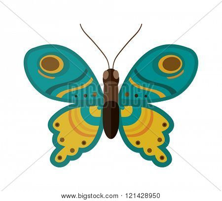 Flat butterfly vector. Flat butterfly isolated on white background
