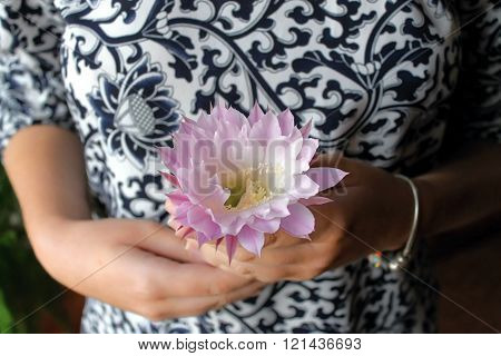 Exotic Flower In The Hands