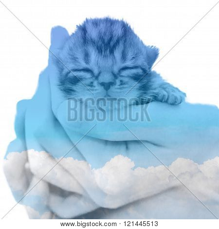American shorthair kitten double exposure with clound in the blue sky poster