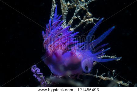 a small purple invertebrate slips on the seabed poster