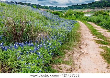 A Wide Angle View of Stormy Skies and a Beautiful Field or Meadow Blanketed with the Famous Texas Bluebonnet (Lupinus texensis) Wildflowers with Old Country Dirt Road. An Amazing Display at Muleshoe Bend in Texas. poster