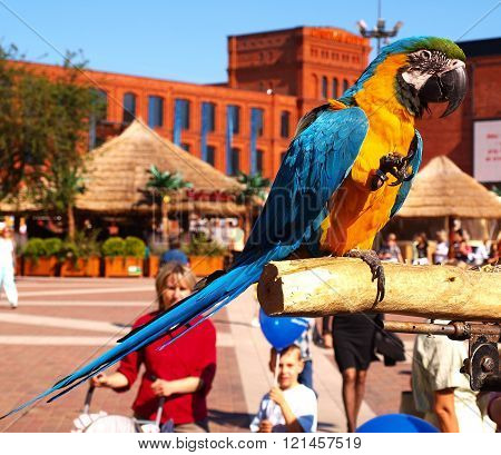 Lodz, Poland - October 19, 2009 Tame parrot greets the of participants the festival in the center of shopping and entertainment Manufaktura in Lodz.