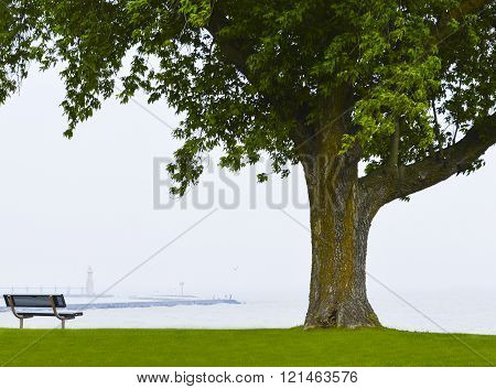 Seating bench on the grass next to a huge tree facing a lake we can see a lighthouse through the fog and some fisherman at the end of the pier.