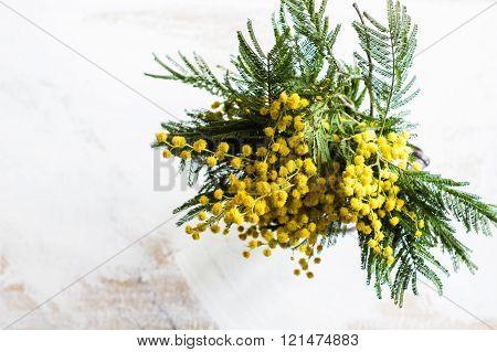 Bright Mimosa Flowers