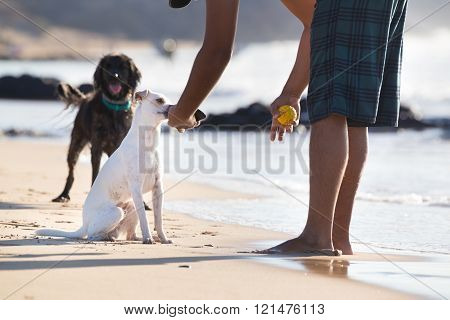 Dogs playing ball on beach in summer.