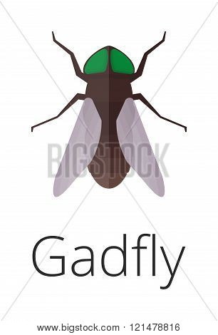 Gadgly skin parasite insect vector bug.