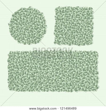 Types Of Trimming Hedges, Shrubs Shaped, Green Hedge, An Element Of Landscape Design, Pruning Trees