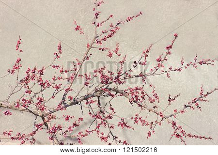 Branch of a apricot at the beginning of flowering