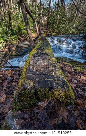 Close Up Perspective Of Moss Covered Log Bridge