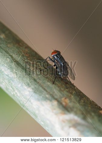 A Fly On Tree Trunk Background