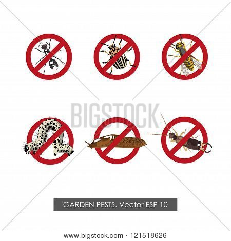 Pest Control. Set Of Prohibition Signs On White Background