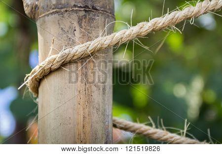 Dry Bamboo Trees