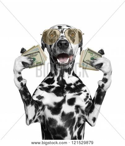 Dog In Glasses Holds In Its Paws A Lot Of Money