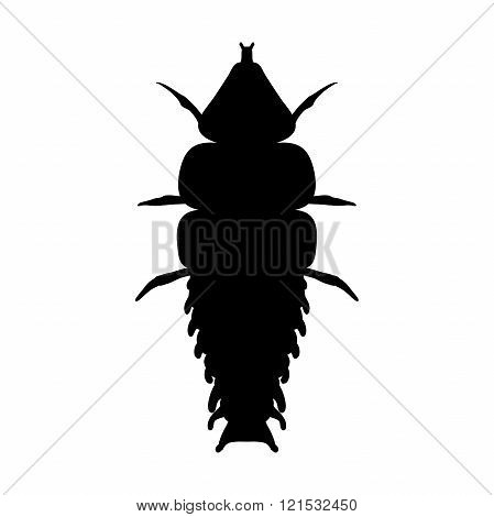 Insect in magnifier. Trilobite beetle Duliticola Platerodrilus. Sketch of Trilobite beetle. Trilobit
