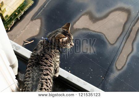 Tabby standing on gutter.