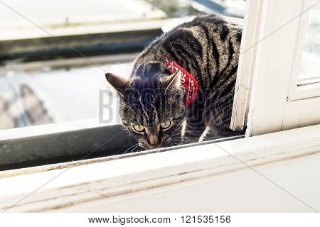 Tabby Sniffing In Gutter.