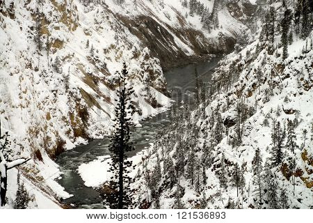 Winter River Yellowstone