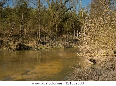 Photo of the river flowing through the forest