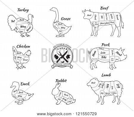 Set Schematic Vew of Animals for Butcher Shop