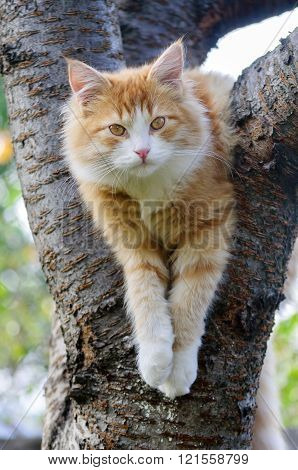 Red cat sitting in a tree