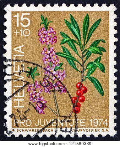 Postage stamp Switzerland 1974 Laurel, Evergreen Tree