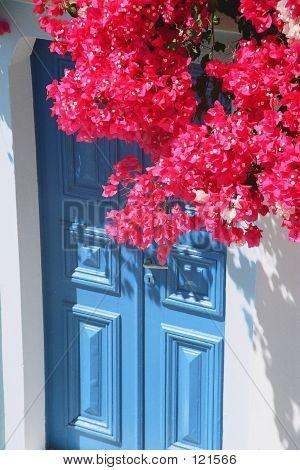Red Bougainvillaea, Blue Door