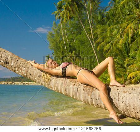 Woman In Bikini Exotic Hideaway