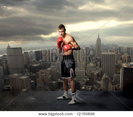 young boxer on the top of new york city