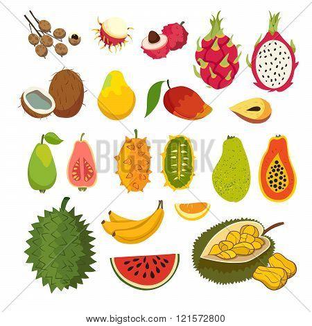 Exotic tropical fruits vector set. Juicy and ripe fruit: papaya guava mango cartoon vector