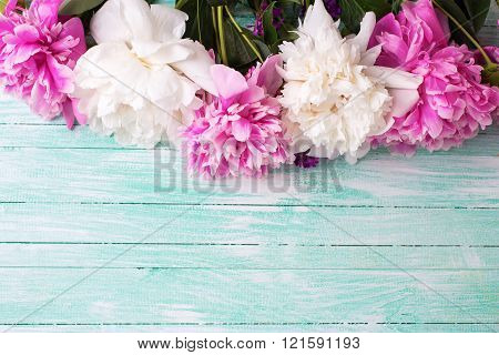 Border From  Pink And White Peonies Flowers On Turquoise Painted Wooden Background.