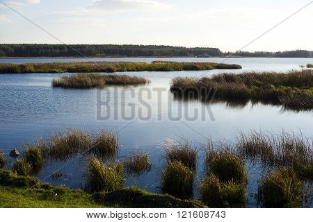 Forest Lake Under Blue Cloudy Sky
