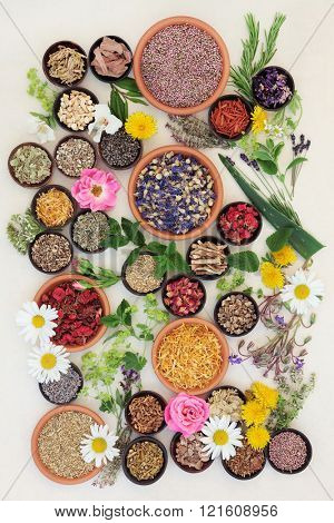 Healing herb and flower selection used in herbal medicine over speckled handmade cream paper background.
