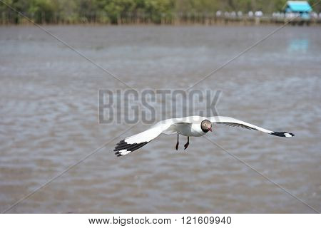 Flying seagulls over mud foreshore area
