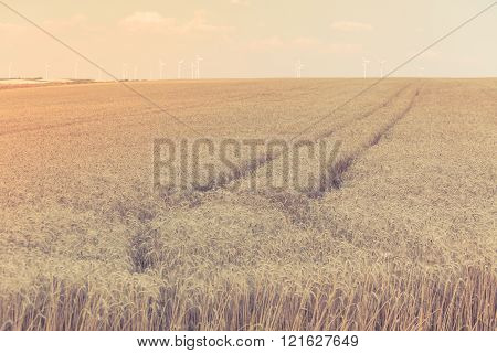 Ripe Cereal Field